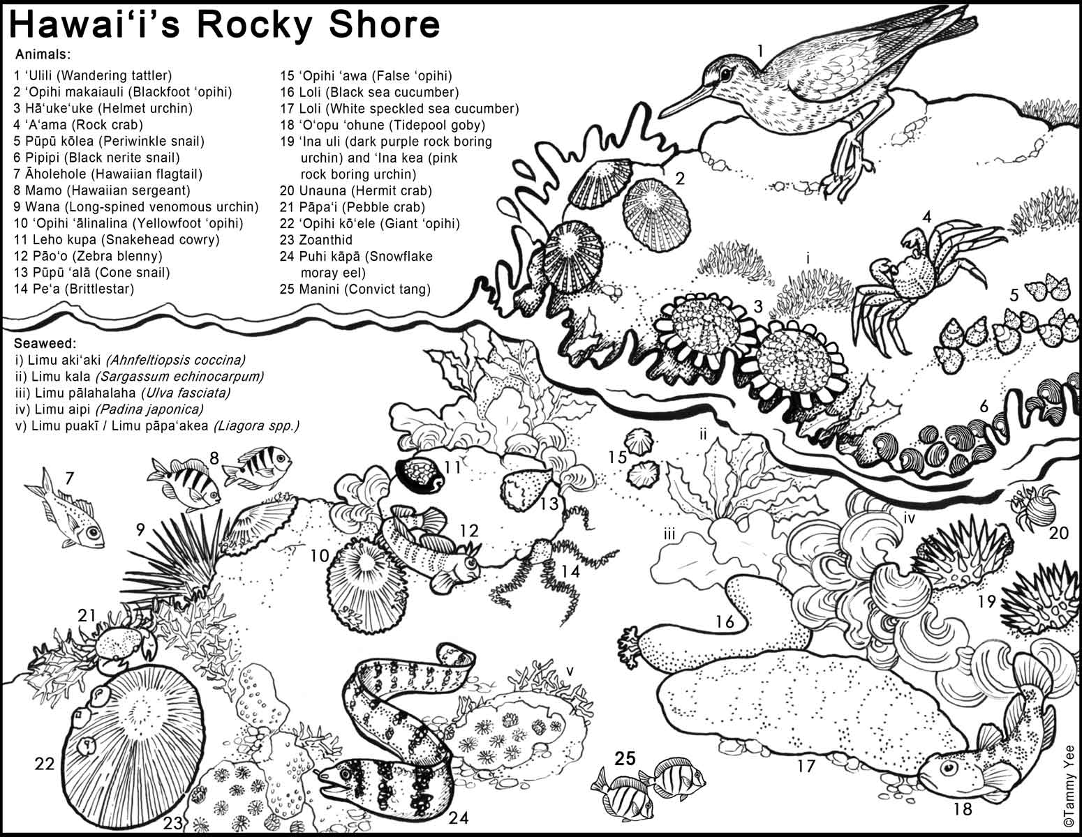 Hawaiian princess coloring pages